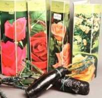Фраза кто посадит он памятник. Как правильно посадить розы, купленные в коробке весной