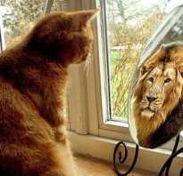 Как поднять самооценку стать уверенной. Как повысить самооценку мужчине: полезные советы