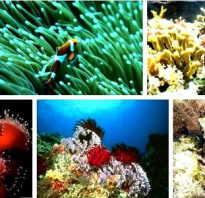 Как нарисовать водоросли в аквариуме. Как нарисовать морские глубины при помощи гуаши
