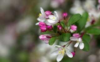 Раскройте символический смысл названия пьесы вишневый сад. Глубокий смысл произведения А