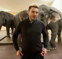Слон в цирке. Дрессировщик Андрей Дементьев-Корнилов: «Мы учим слонов не бояться публики»