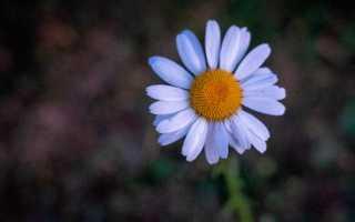 Любовь андреевна положительный или отрицательный персонаж. Образ и характеристика Ани Раневской в пьесе «Вишневый сад» Чехова