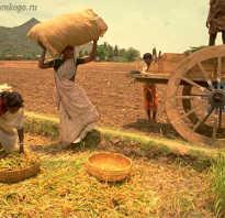 Что означает понятие традиционное общество. Развитие и становление традиционного общества