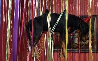 Выставка яна фабра в главном штабе. Эрмитаж шокировал посетителей выставкой с мертвыми животными на крюках