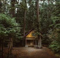 Поговорка построить дом посадить дерево вырастить сына. Построить дом, посадить дерево, вырастить сына