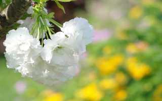 Дуняша вишневый сад характеристика. Сочинение «Характеристика Дуняши в пьесе «Вишневый сад