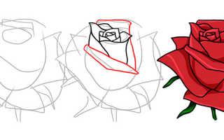 Картины карандашом цветы поэтапно. Как красиво нарисовать бутон розы поэтапно карандашом: схема