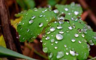 Как проходит жизнь водяного общества. Урок литературы на тему «М.Ю.Лермонтов «Герой нашего времени» («Печорин и «водяное общество»)