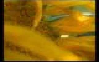 Изображение губительной власти денег в повести «Гобсек» (по одноименному произведению Оноре де Бальзака). Губительная сила денег в повести О