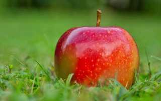Какой смысл названия рассказа бунина антоновские яблоки. «Антоновские яблоки» — анализ произведения Бунина