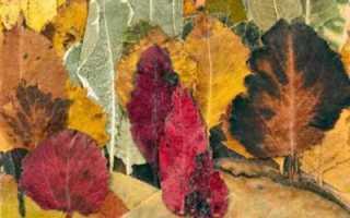 Красивые картины из сухих листьев и цветов своими руками. Как сделать панно из осенних листьев своими руками