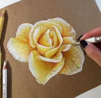 Рисунки карандашом цветы цветные. Как рисовать цветными карандашами для начинающих — лучшие советы