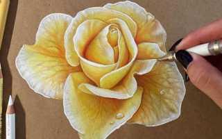 Рисунки карандашом легкие и красивые цветы. Пошаговый урок, как рисовать цветы карандашом