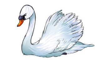 Как нарисовать лебедя поэтапно карандашом для начинающих и детей? Как нарисовать лебедя на озере? Лебедь: рисуем, лепим, мастерим, шьем.