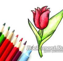 Как рисовать тюльпаны карандашом поэтапно для начинающих. Как нарисовать тюльпан карандашом поэтапно