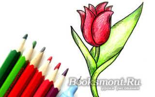 Нарисовать тюльпан карандашом поэтапно. Как нарисовать тюльпан? Инструкция для тех, кто только начинает рисовать