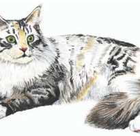Осваиваем анималистический жанр: как красиво нарисовать кошку с ребёнком. Рисуем кошек без проблем