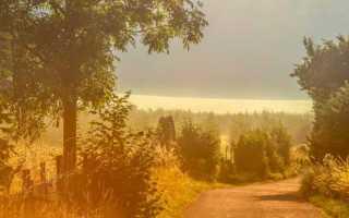 Описание природы в рассказе ася. Роль пейзажной зарисовки в повести И.С.Тургенева `Ася`