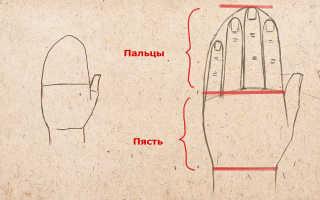 Как нарисовать руки карандашом поэтапно. Как нарисовать руки, рисуем руки и пальцы человека поэтапно
